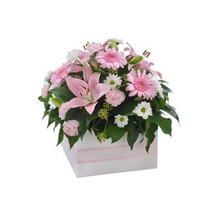 Impulse - Arrangement of 12 / 24 Red Roses in a Ceramic Pot - image softness-300x300 on http://tranquilblooms.com.au