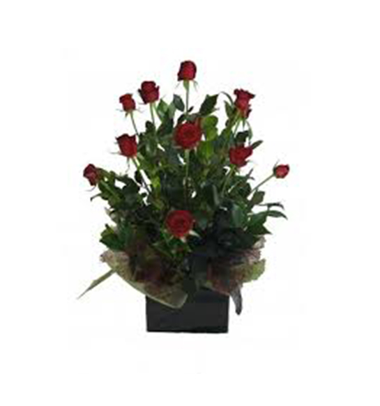 tranquil blooms Posy box of 12 red roses - All rose colours