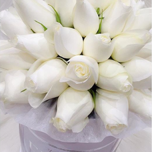 tranquil blooms WHITE roses white box 1