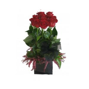 Mini box of 12 red roses (short)